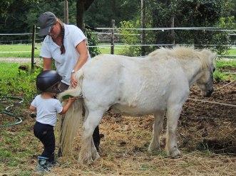 Mini-poney pour mini-cavalier