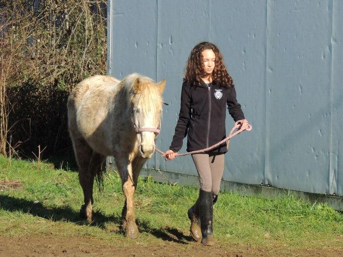 On ramène les poneys du pré