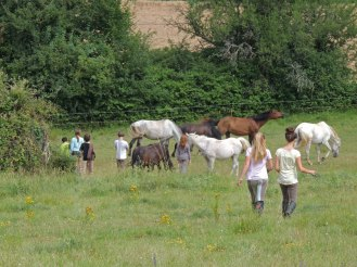 On s'occupe des chevaux