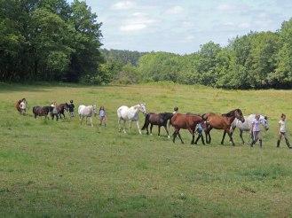 On va chercher les chevaux au pré