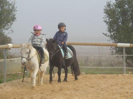 Les baby-poneys, trop chou