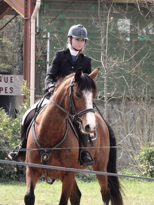 Concours équitation