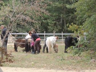 Les petits brossent les poneys