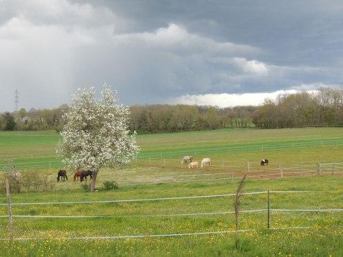 Les prés au printemps